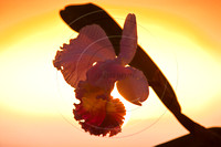 Orchid Against Sun